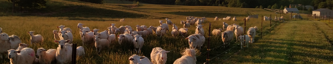 West Fork Farms - Katahdin Hair Sheep